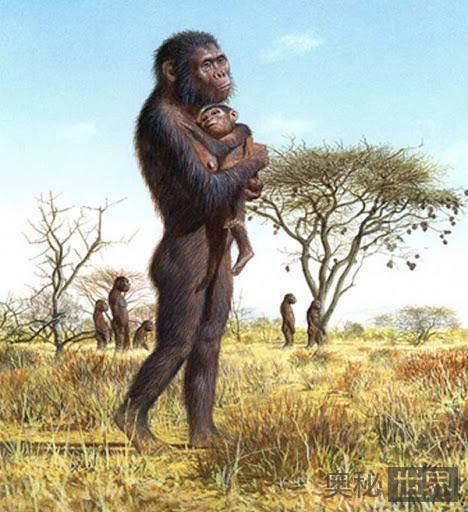 全人类的祖先,真的是南方古猿露西吗?