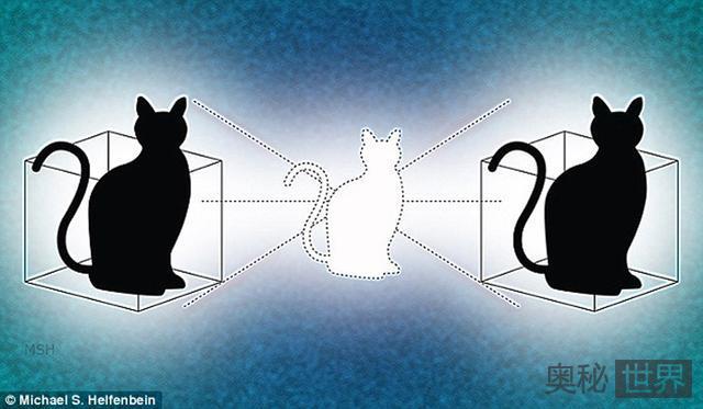 同时处于生与死状态的薛定谔的猫