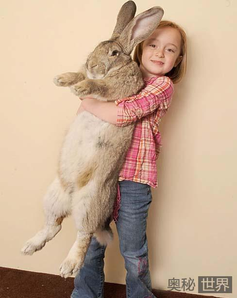 """""""小""""兔子Darius"""