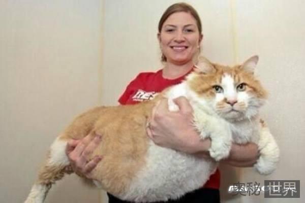 世界上最胖的猫