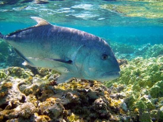夏威夷帕帕哈瑙莫夸基亚国家海洋保护区