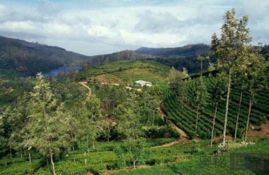 斯里兰卡中部高地