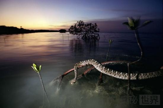 美国大沼泽地国家公园