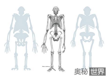 最古老人类祖先骨骼化石