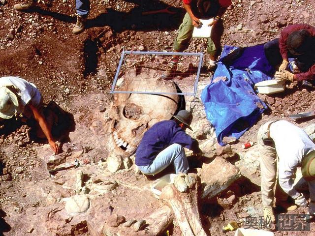 美国垂发洞的巨人骨骸之谜