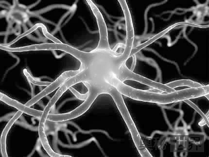 死亡的脑细胞不可以再生