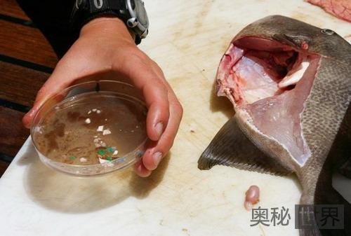 鱼类吃掉了大西洋的垃圾带的塑料