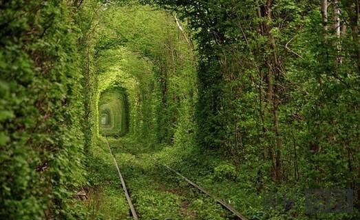 """乌克兰的""""爱情隧道"""""""