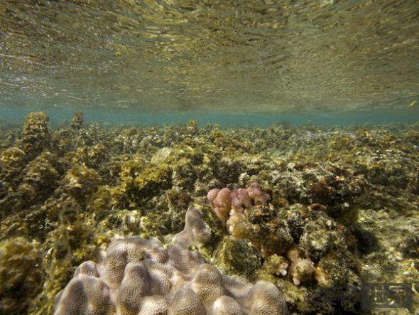 水温导致珊瑚漂白