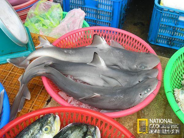 菜市场发现角鲨新种类