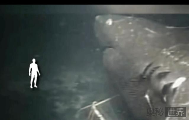 马里亚纳海沟1.6公里深处 拍到巨型生物