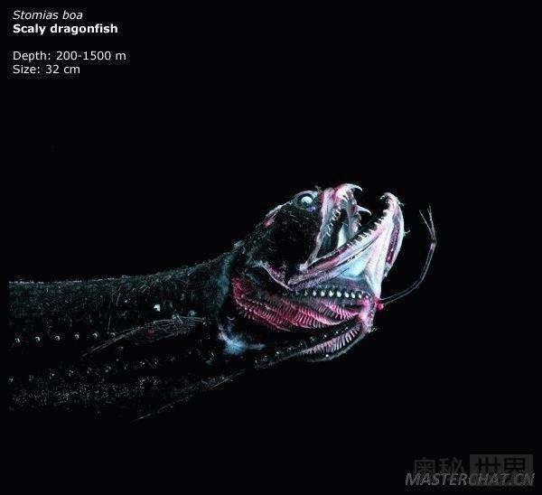 世界之底马里亚纳海沟 竟有如此恐怖生物