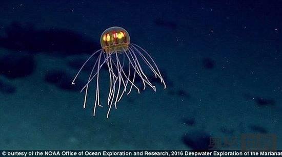 美国专家探索马里亚纳海沟发现未知生物