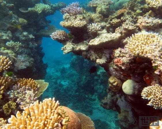 澳大利亚,大堡礁