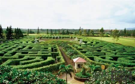 凤梨花园迷宫