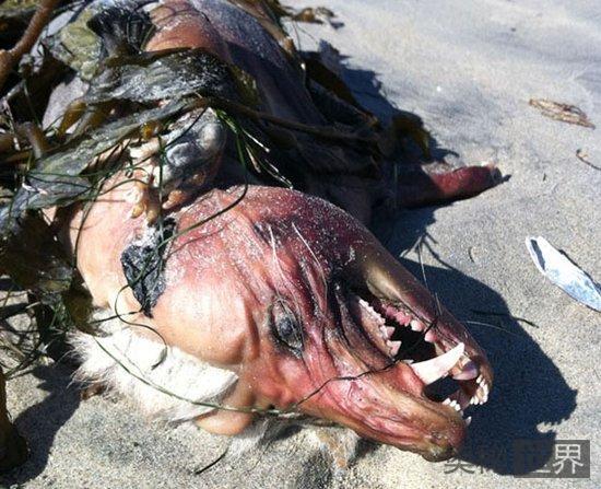 美国发现疑为吸血怪兽的神秘动物尸体