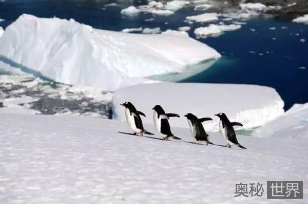 南极洲的八大未解之谜