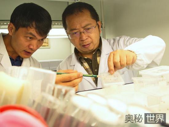 中国科学家发现蜘蛛乳汁震动科学界