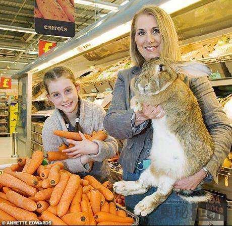 英国巨型兔子打破吉尼斯世界纪录,成世界最大兔子