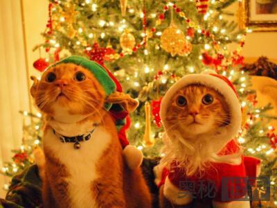 平安夜和圣诞节有什么区别?