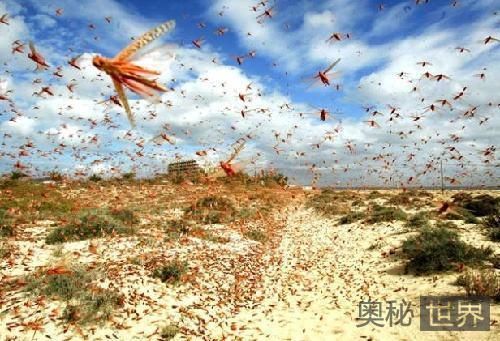 """宋真宗赵恒被群臣""""忽悠"""":蝗虫摄于皇威集体自杀"""