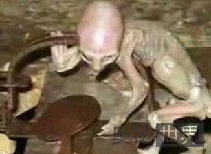 墨西哥发现类似蜥蜴的外星人宝宝