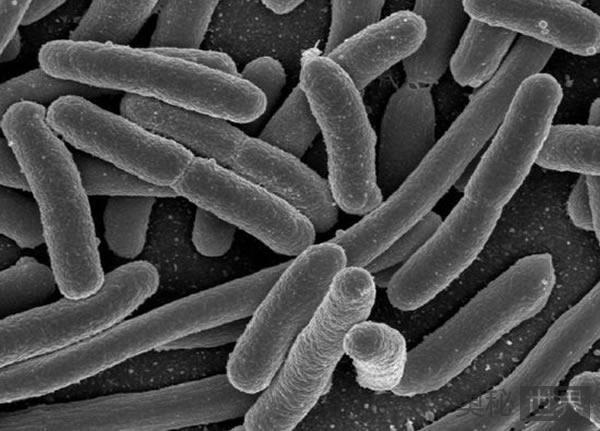 火星上的微生物可能来自地球