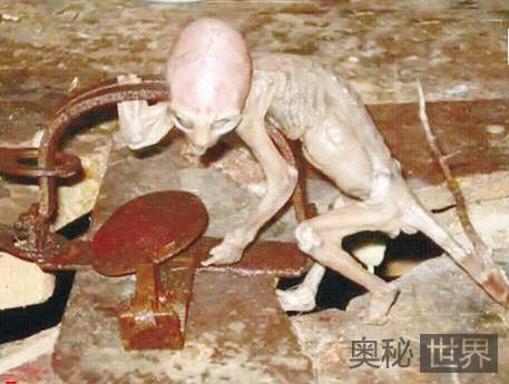墨西哥溺毙外星人的农夫离奇死亡