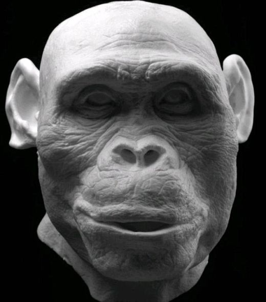 南非发现的非洲南方古猿(Australopithecus africanus)颅骨被用来重塑这个祖先面部模型,这种人生活在大约200万年前,被称作德兰士瓦迩人(Plesianthropus transvaalensis)