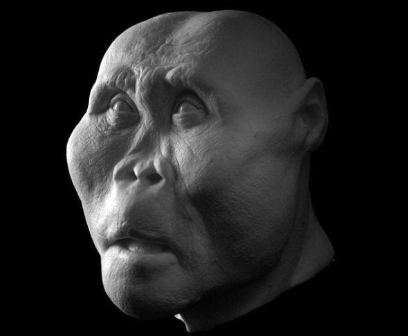 """鲍氏傍人(Paranthropus boisei)生活在200万年前,他的颅骨特别善于咀嚼。这种人类又被称作""""胡桃夹子人"""",这是因为他们拥有比目前已知的任何古人类个头更大的后牙和目前已知最厚的牙釉质"""