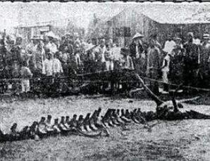 历史上是否真的有龙?1934年营口坠龙事件真相