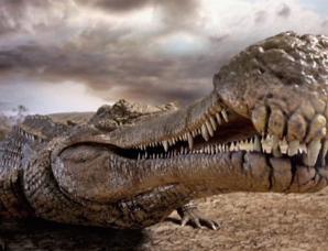 """生活在1亿1000万年以前的""""帝鳄竟以恐龙为食"""