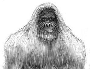 中国南方巨猿灭绝之谜