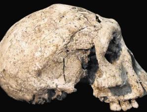 格鲁吉亚发现半猿半人生物化石