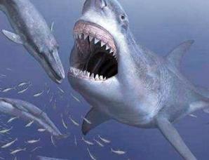 邓氏鱼和巨齿鲨打谁更厉害