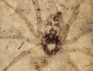 2010年最著名的八大化石