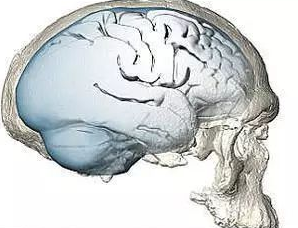 科学家发现尼安德特人大脑独特特点