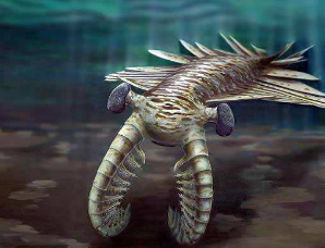 史上最大的虾,奇虾体长达2米,曾统治地球