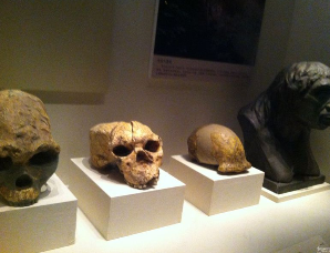 北京人,元谋人,山顶洞人,这些古人类之间有什么区别?