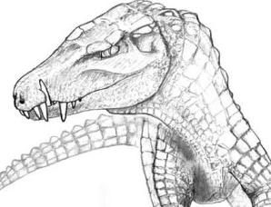 巴西发现新物种化石,曾以恐龙为食