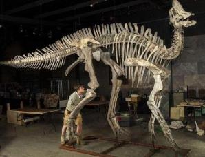 鸭嘴龙类恐龙起源于亚洲