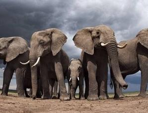 人类即将迎来第六次物种大灭绝